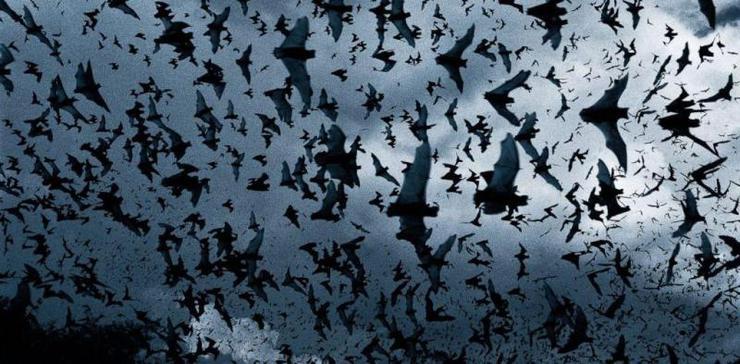 bats-swarm