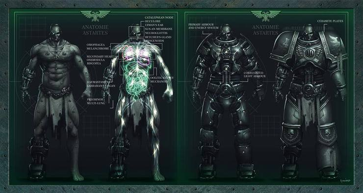 Astartes Anatomy - How They Become Space Marines - Spikey Bits