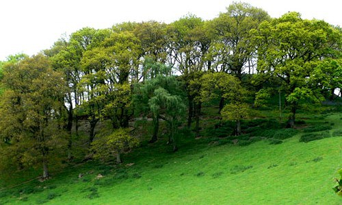 wooded hilltop